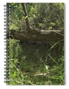 Fallen Tree In Peters Canyon Spiral Notebook