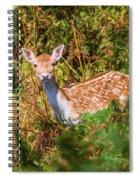 Fallow Deer 2 Spiral Notebook