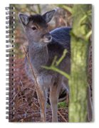 Fallow Deer Fawn Spiral Notebook