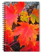 Falltime ...  Spiral Notebook