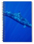 False Killer Whale Spiral Notebook