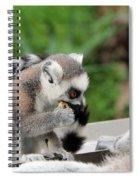 Family Of Lemurs Spiral Notebook