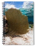 Fan-tastic Sea Web Spiral Notebook