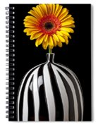Fancy Daisy In Stripped Vase  Spiral Notebook