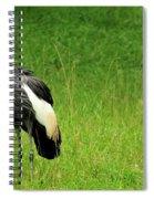 Fancy Spiral Notebook