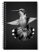Fantail Hummingbird Square Bw Spiral Notebook