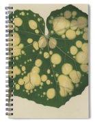 Farfugium Grande  Leopard Plant, Green Leopard Plant Spiral Notebook
