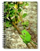 Fat Frog Spiral Notebook