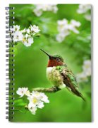 Fauna And Flora - Hummingbird With Flowers Spiral Notebook