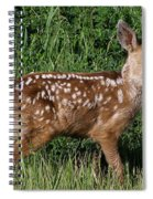 Fawn In The Open Spiral Notebook