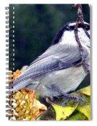 Feast For A Chickadee Spiral Notebook