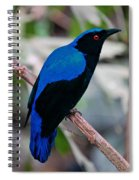 Feathered Fairy Spiral Notebook
