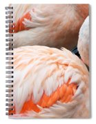 Feathers Of Flamingo Spiral Notebook