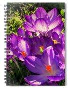 February Crocus Spiral Notebook