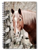 February Horse Portrait Spiral Notebook