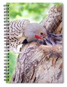 Feeding Babies In The Nest Spiral Notebook