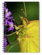 Feeding Butterfly Spiral Notebook