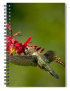 Feeding Hummer Spiral Notebook