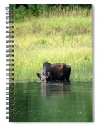 Feeding Moose Spiral Notebook