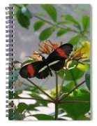 Feeding Time - Butterfly Spiral Notebook
