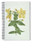 Feel-fetch - Hypericum Quartinianum Spiral Notebook