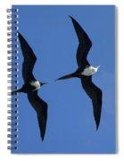 Female And Juvenile Magificent Frigatebird Fregata Magnificens 2 Spiral Notebook