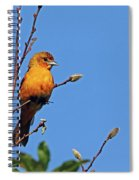 Female Baltimore Oriole Spiral Notebook