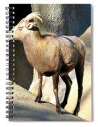 Female Bighorn Sheep Ewe Spiral Notebook