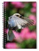Female Bluebird In Flight Spiral Notebook
