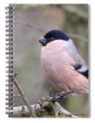 Female Bullfinch Spiral Notebook