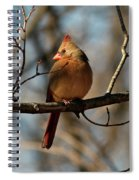 Female Cardinal Spiral Notebook