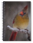 Female Cardinal In The Winter Spiral Notebook