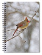 Female Cardinal In Winter Spiral Notebook