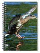 Female Duck Landing Spiral Notebook