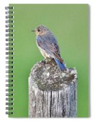 Female Eastern Bluebird 4479 Spiral Notebook