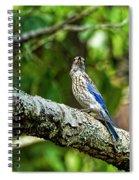 Female Eastern Bluebird Portrait Spiral Notebook
