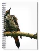 Female Flicker Spiral Notebook
