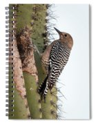 Female Gila Woodpecker-img__2691-2016 Spiral Notebook