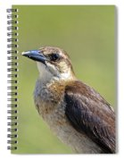 Female Grackle Spiral Notebook