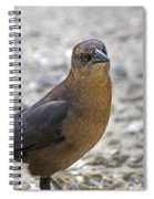 Female Grackle With Attitude Spiral Notebook