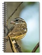 Female Grossbeak Looking Back Spiral Notebook