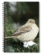 Female House Finch On Snow Spiral Notebook