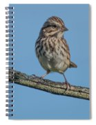 Female House Finch Resting Spiral Notebook