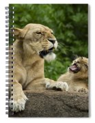 Momma Lion Over Cubs Attitude Spiral Notebook
