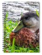 Female Mallard Duck Resting 4 Spiral Notebook