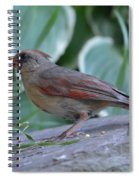 Female Northern Cardinal  Spiral Notebook