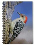 Female Red-bellied Woodpecker Spiral Notebook