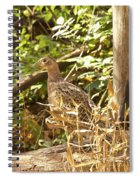 Female Ring-necked Pheasant - Phasianus Colchicus Spiral Notebook