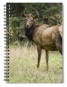 Female Wapiti Spiral Notebook