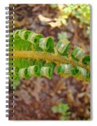 Fern Branch Leaves Art Prints Forest Ferns Natures Baslee Troutman Spiral Notebook
